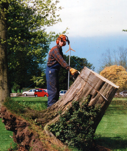 Landscape Garden Rugby : Tree surgery rugby garden maintenance or alive